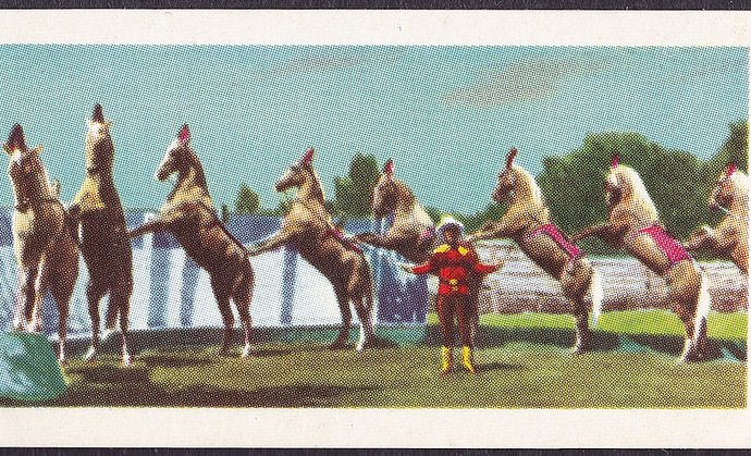 1958 Roy Rogers Trade Card - Liberty Horses